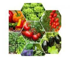 Plantas Orgánicas